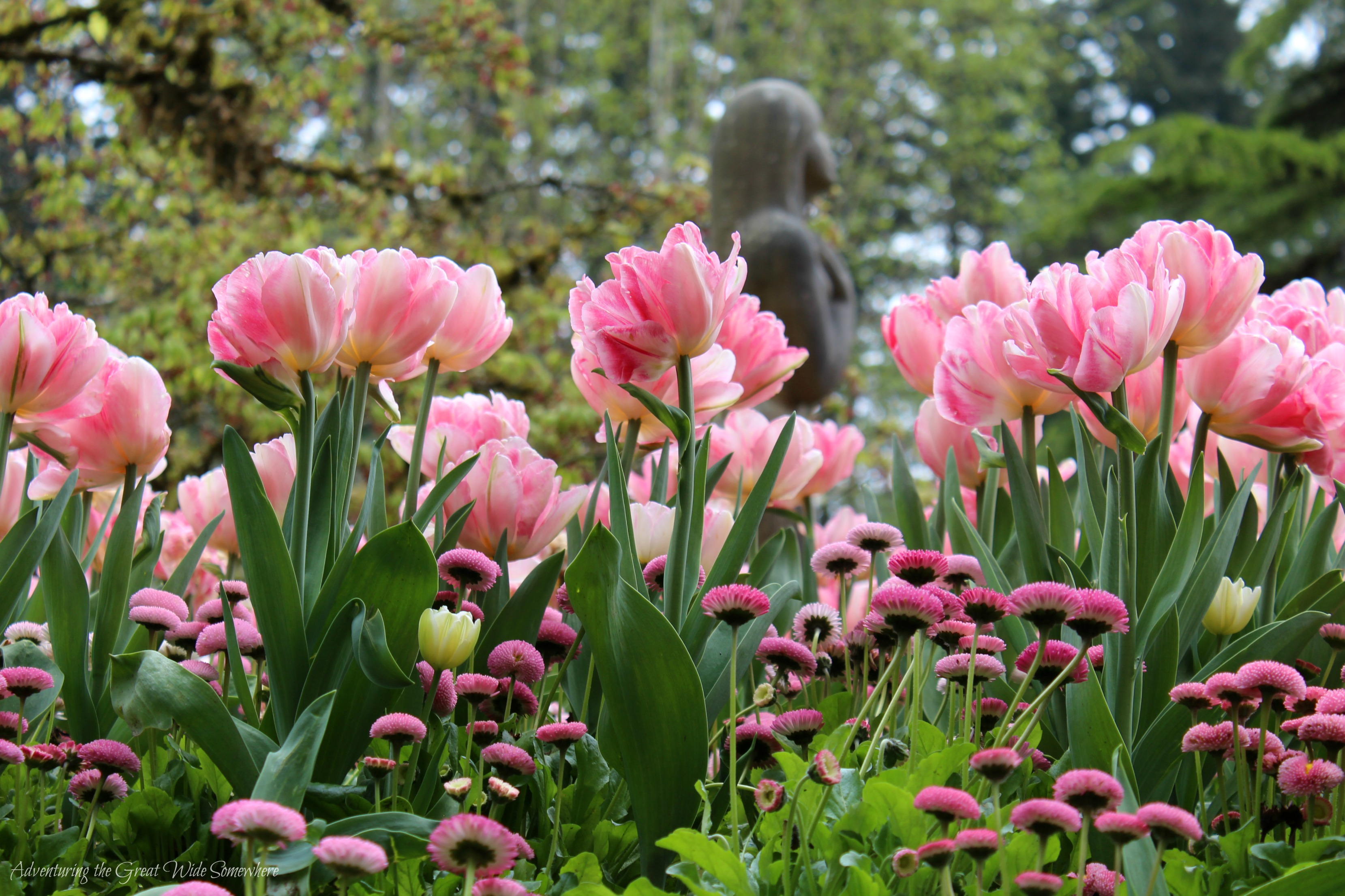 Beauty in Bloom at the Butchart Gardens