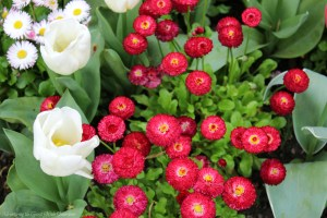 Bright, Summery Colors at the Butchart Gardens