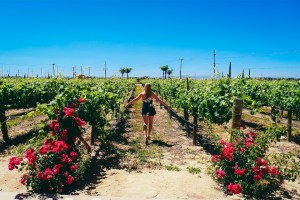 """alt=""""in the vines of Temecula"""""""