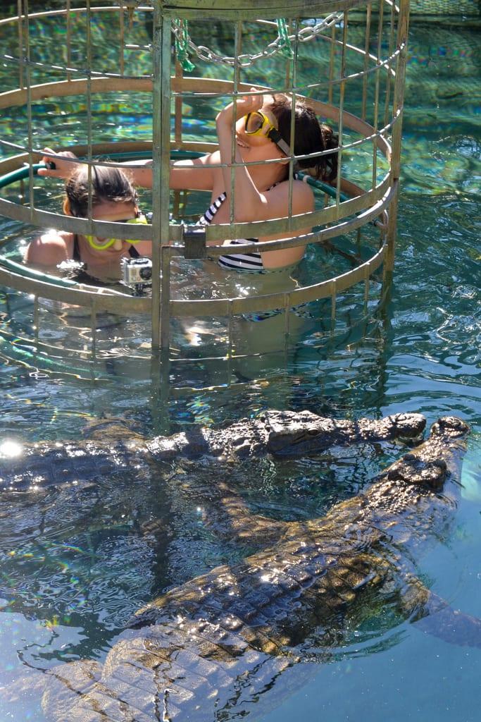 Croc Diving in Oudtshoorn
