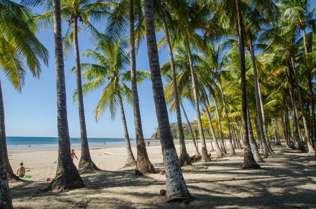 Palm trees lining the beach in Samara