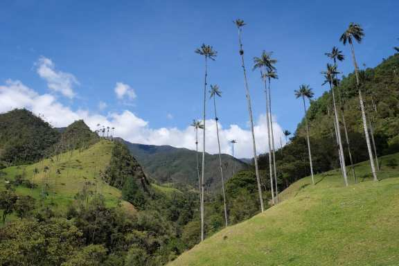 Valle del Cocora