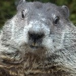 Happy Ground Hog Day From the Advice Sisters…and Punxsutawney Phil