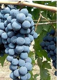 the wines of veneto are very delicioso