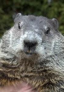 Happy Groundhog Day!!! #groundhogday