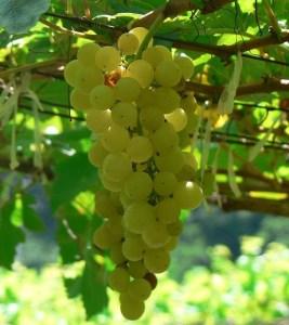 Hooray for Vouvray & Virtual Wine Tastings (you've gotta try them) @Snooth @loirevalleywine #UrLoire
