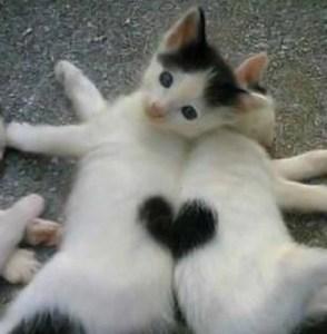 heart cats