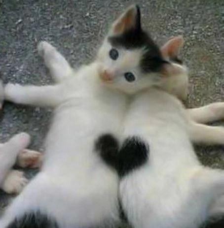 v-day cats