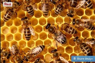It's NO secret: A Bit o Manuka Honey Makes Great Skincare @ManukaSecrets, @ManukaLab, #honey