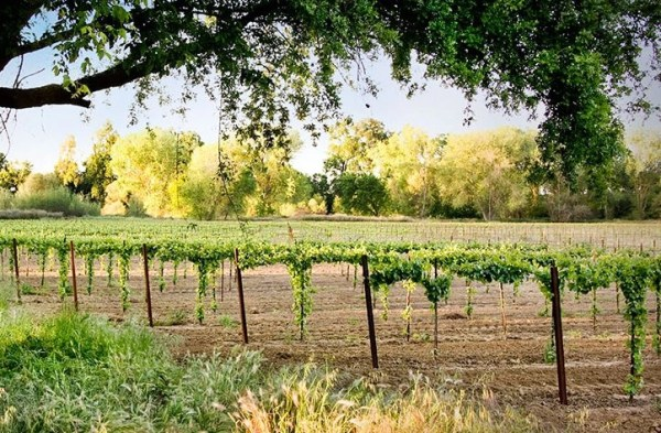 Get a Load of these Lodi Wines,  Virtual Wine Tasting Of a Variety of Varietals