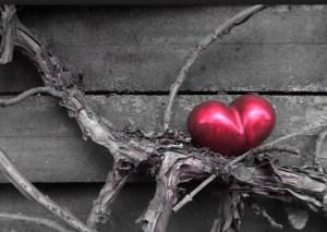 illogical true love heart in a tree