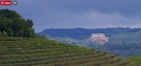 brazil vineyard