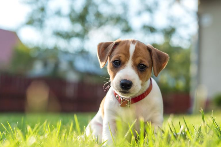 cute little puppy in the grass