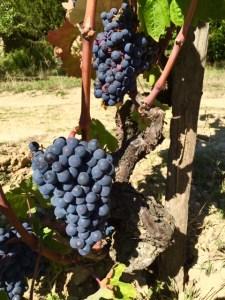 La Rioja Spain