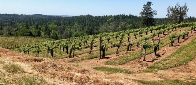 Boeger Winery: Spearheading El Dorado County Wine