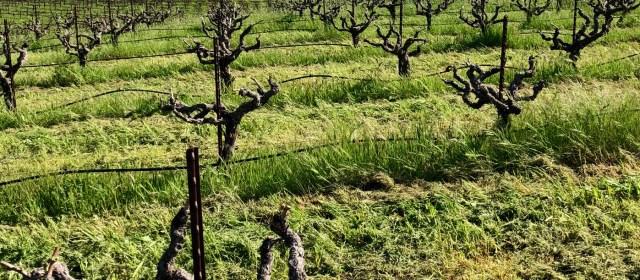 Cedarville Vineyard: A Level Above