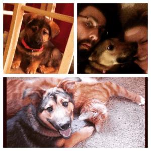 Meet Bobby's happy pets Artemis and Rori.