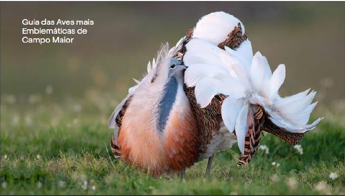 Guia das Aves mais Emblemáticas de Campo Maior – 2ª Edição