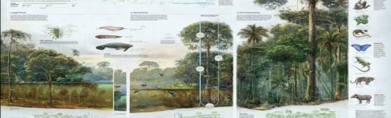 La importancia de la ilustración científica y la infografía. Entrevista a Fernando G. Baptista