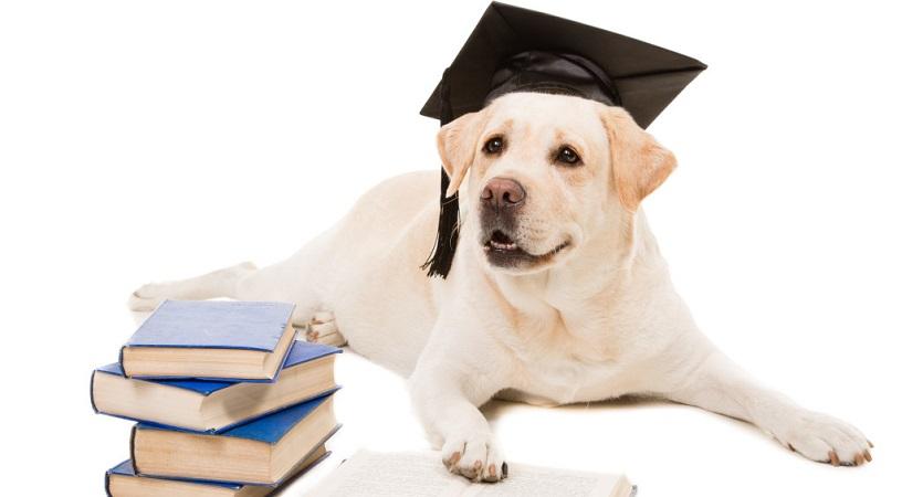 Los Perro Mas Inteligentes