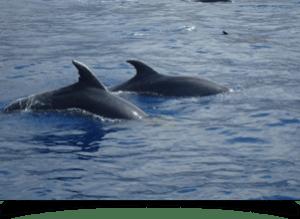 Pescatori vs Delfini