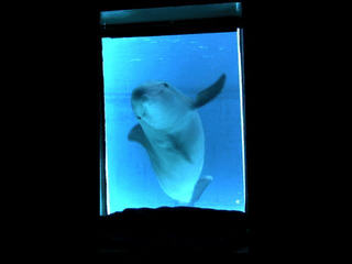 I delfini allo specchio