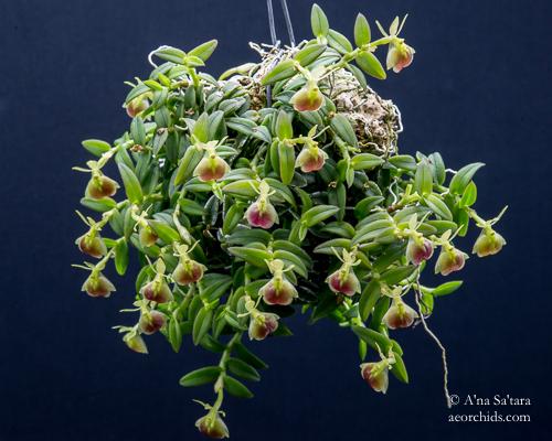LED lights for orchids
