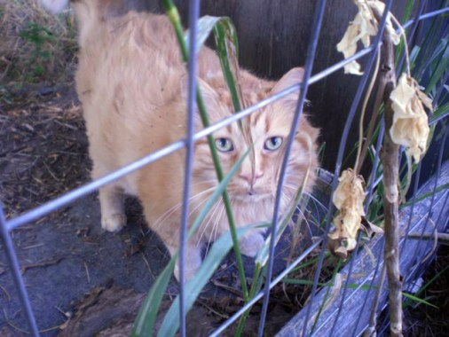 "Moe, behind bars in the ""cat-run""."