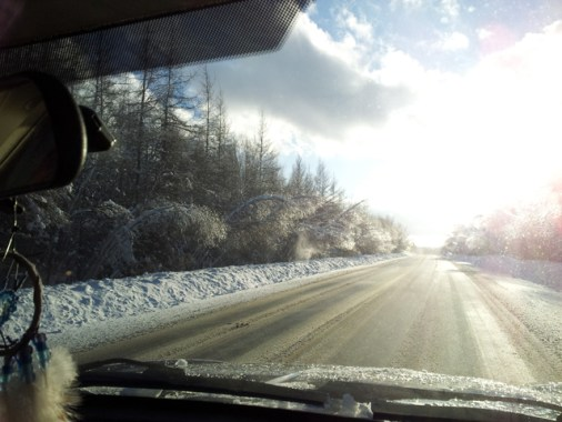 Bowing trees along the road, bright sunlight ahead.
