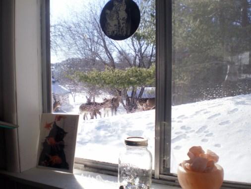 Several deer through a porch window.