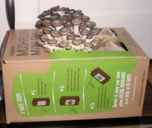 "Box labeled ""Mushroom Farm"" with mushrooms growing out of it."