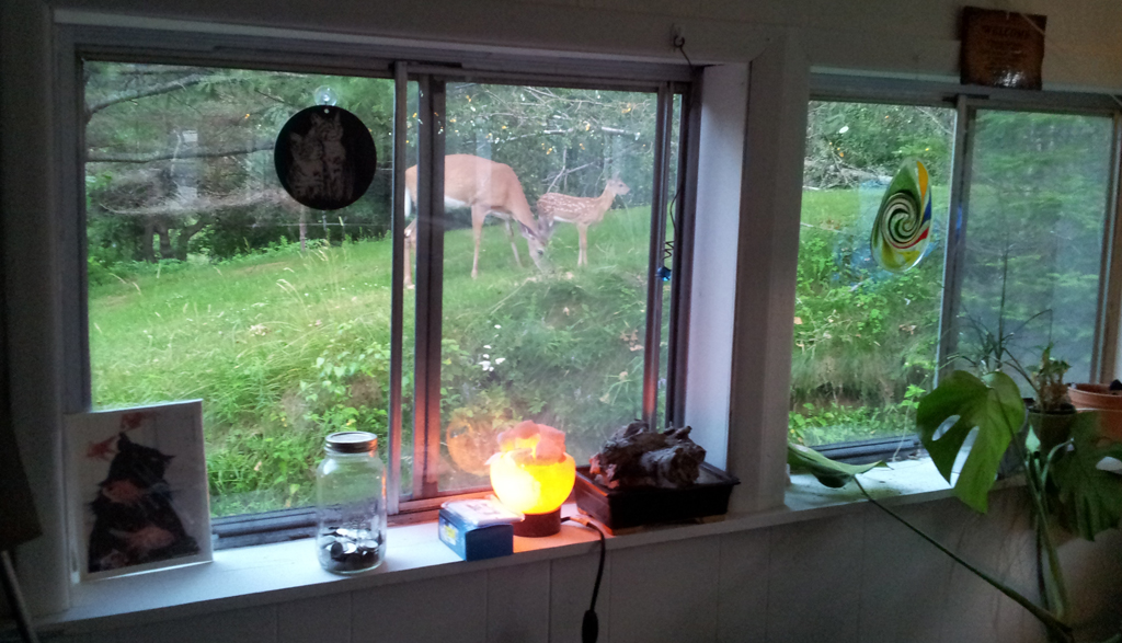 Doe and Fawn through Porch Window