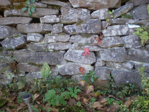 Ivy with some leaves turning red climbing a stone wall