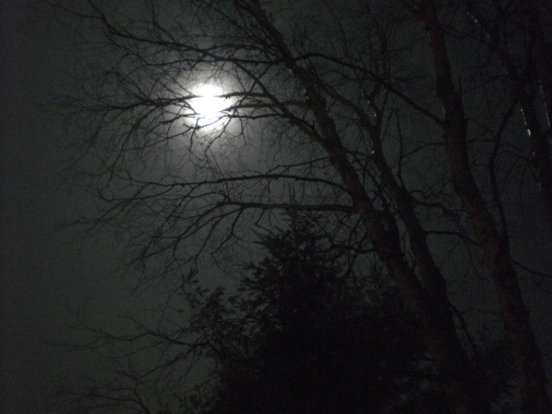Full moon through the trees on Christmas Eve, 2015