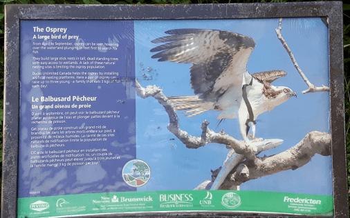 Osprey plaque.