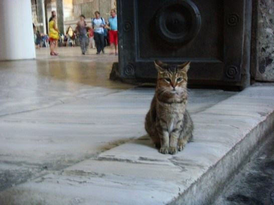 Kitty resting on the steps in the Hagia Sophia