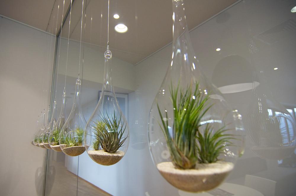 Terarii-plante-aeriene-Arcub1