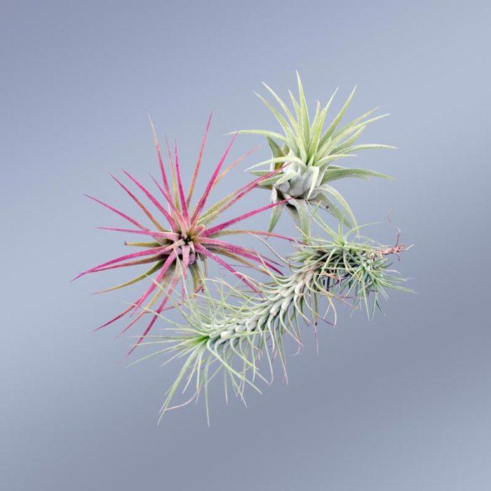 3-plante-aeriene