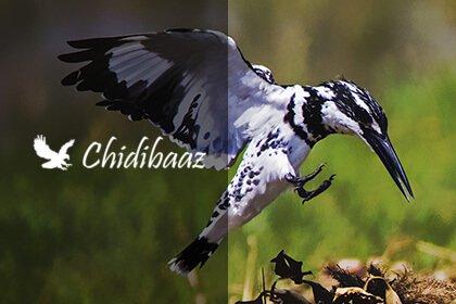 chidibaaz