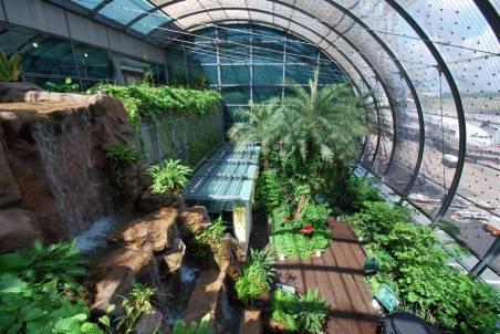 Singapore-Changi-Airport_butterfly_garden