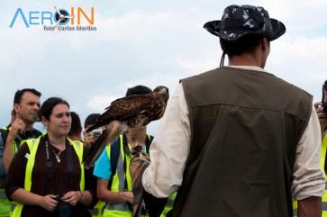 Funcionário do BIOCEV fala sobre o trabalho das aves no Aeroporto da Pampulha.