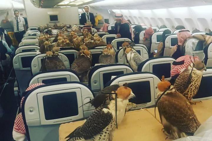 Falcões avião Flydubai