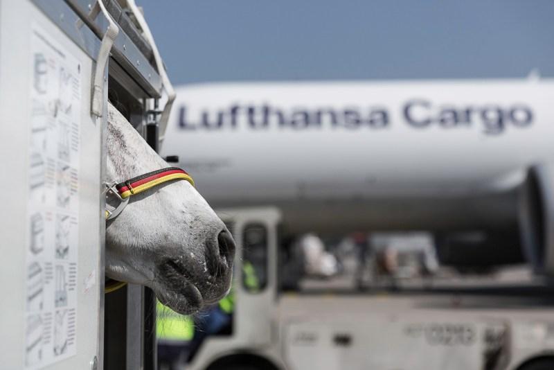 Lufthansa Cargo Animal Lounge Frankfurt