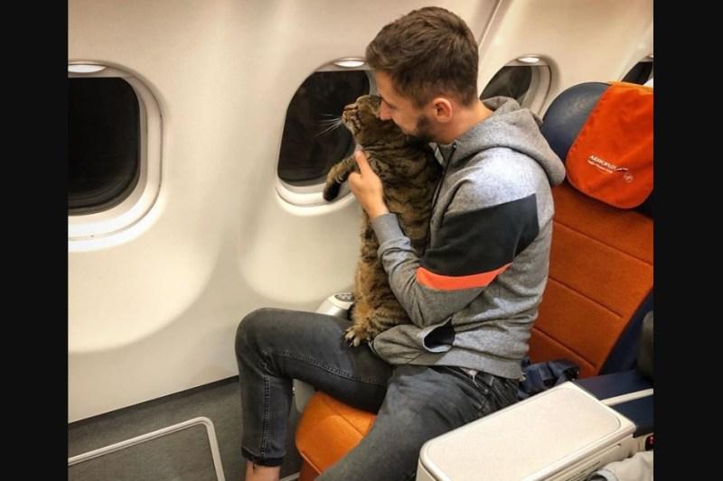 Passageiro russo golpe gato gordo voo Aeroflot