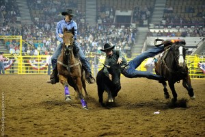 Steer wrestling in the rodeo (source:http://www.lovelydenver.com/national-western-stock-show-prca-rodeo)