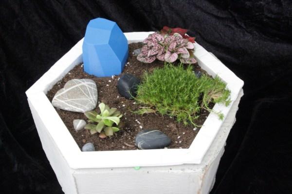 Desk Garden by Ashley Zimmerer