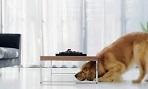 cachorro com stress