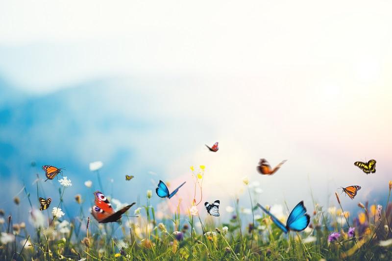 Abortion: Butterflies or Butchery?