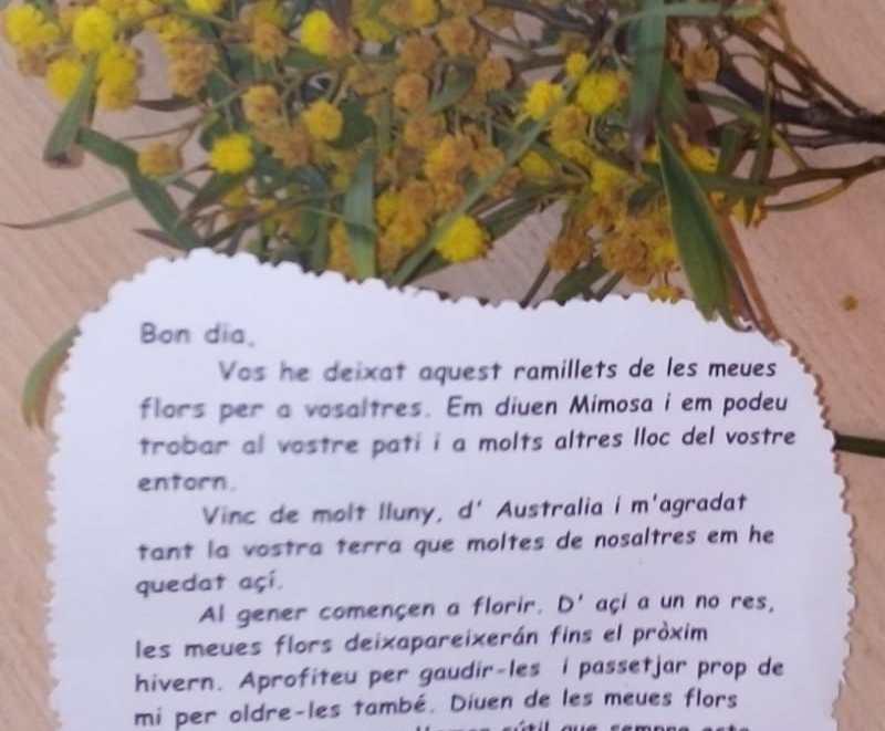 mensaje de la mimosa del patio Colegio Vicente Blasco Ibáñez de Elche
