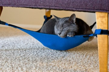 objet-maison-chats